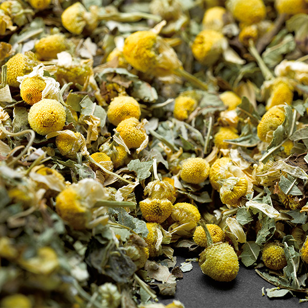 AVOURY The Camomile